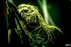 Asphyx - live in Metalmania XXIV fot. Łukasz MNTS Miętka-22