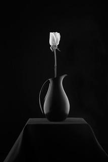 Rose In Vase On Pedestal