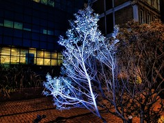 Magic tree (Мaistora) Tags: tree plant shrub bush decorative garden gardening design decoration lighting street riverside promenade office riverfront pedestrian walkway night evening building architecture landscaping blue cold fluorescent effect lamp light glow surreal magic fantasy orange yellow pavement tiles bike bicycle phone mobile galaxy s8 luminar urban city monument londonbridge squaremile thames river london england britain uk