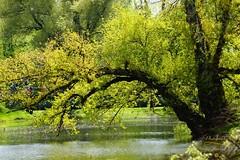 In the park (Jurek.P) Tags: park kępapotocka warsaw warszawa poland polska city citypark capitalcity spring wiosna jurekp sonya77