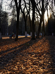 Apr 15, 2018 (pavelkhurlapov) Tags: contrast park bench girl trees deadleaves light sunset insects shadows silhouettes walkway mood