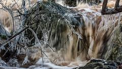 Mörrumsån (tonyguest) Tags: mörrumsån river istapp icicles vattenflöde mörrum blekinge karlshamn sverige sweden tonyguest stockholm laxenshus salmon fishing ice water movement motion