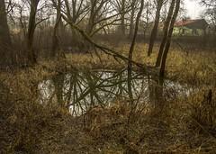 Secret lake (vandorlilla) Tags: lake nature hun hungary canon brown green stank trip untouched reflection reflexion adventure