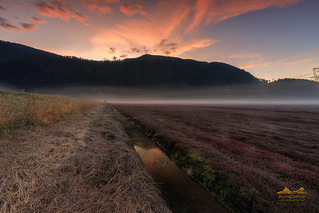 Pitt Lake, Pitt Meadows BC