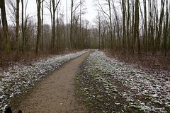 In het Brakels bos (Marja S) Tags: kasteelbrakel brakelsbos landgoedbrakel brakel gelderland