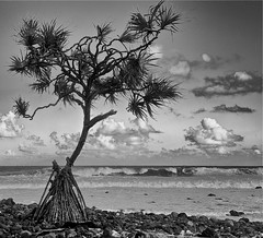 Standing Alone Against the Sea (Ken'sKam) Tags: sea seascape tree shoreline wave surf sky rocks roots n bw blackandwhite