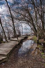 Parentis- le lac_3986 (lucbarre) Tags: parentis en born landes lac eau ponton bois france pins biscarosse