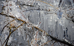 Ice curtain (Maryna K.) Tags: nature frozenbush frozen frosty frostyday ice icicle winter