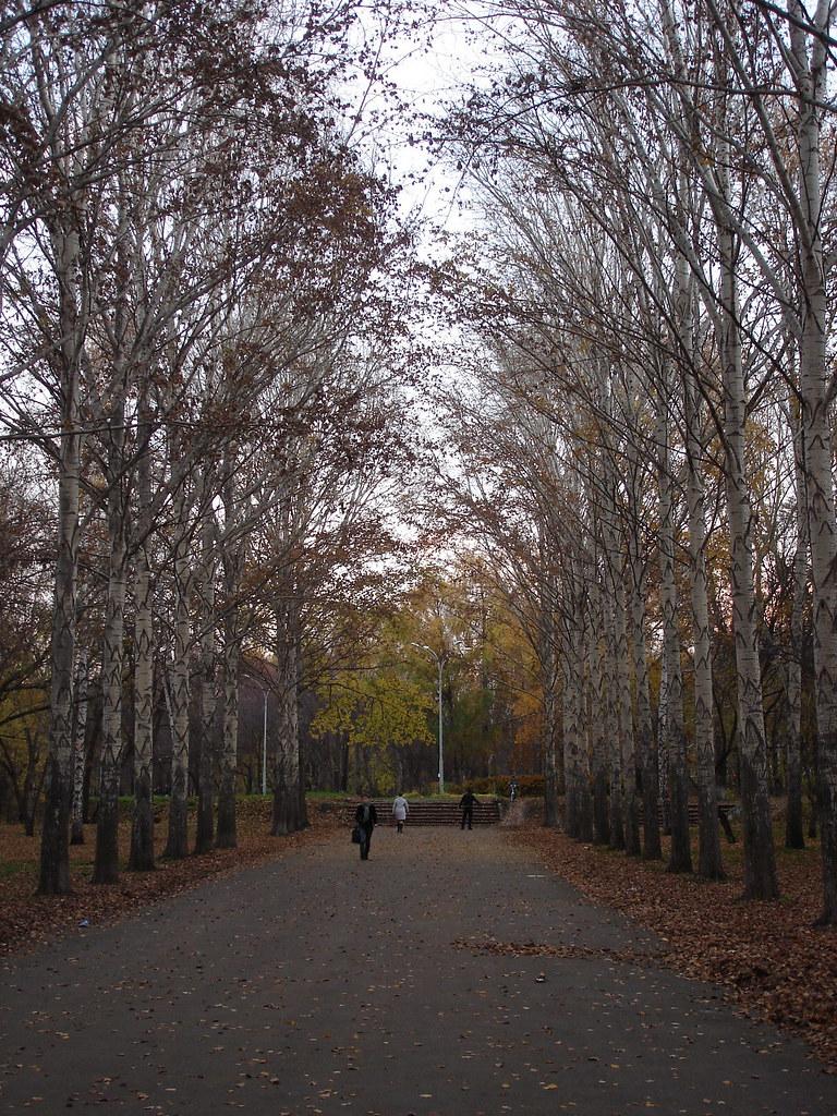 фото: Аллея в парке Дворца молодёжи