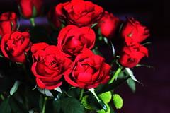 DSC_8988 (PeaTJay) Tags: nikond750 sigma reading lowerearley berkshire macro micro closeups gardens indoors nature flora fauna plants flowers bouquet rose roses rosebuds