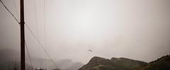 Home (Austin Barton) Tags: bird wildlife telephone line los angeles mountains clouds rain dark greenery high mist gloomy storm