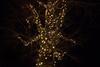 Fireflies Tree (AprilFreak) Tags: fireflies lights mysterious night yellow nature creative tree