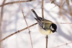 adore me (margycrane) Tags: bird winter zima