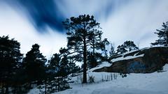 (thom1331) Tags: trees snow winter night sky clouds