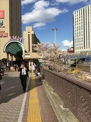 IMG_0135 (Coto Language Academy) Tags: iidabashi outside school cherryblossoms