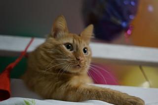 Cat Mattis