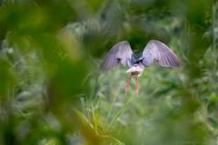 An Angel in the Jungle (JohnKuriyan) Tags: kumarakom kerala india in