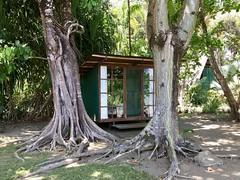 Costa Rica: March 2018 (surharper) Tags: costarica osapeninsula ojodelmar fincamia stevenharper wilderness tropicalrainforest pacificocean cerrochirripo cloudforest
