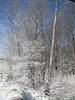 April Snow in PA (donegal_16127) Tags: snow snowfall woods trees april nwpa mercercounty pa