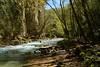 Il fiume Aniene verso il lago di San Benedetto (giorgiorodano46) Tags: aprile2018 april 2018 giorgiorodano subiaco lazio italy nikon aniene river rivière fiume bosco bois woods stream