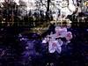 Subtract_0015 (troutcolor) Tags: imagemagick bash victoriapark evaluatesequence
