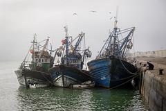 Seul contre tous (Yves Lahanque) Tags: bateau maroc marocain essaouira pêcheur hiver port brouillard trio fujixt20