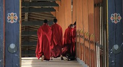Monks At Punakha Dzong (111) (Richard Collier - Wildlife and Travel Photography) Tags: bhutan buddhism monks
