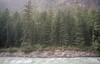 #Kasol #India (Jarred van Hoppe) Tags: kasol india trees river om1 om2 50mm 14 zuiko