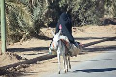 Covering Her Face Completely (meg21210) Tags: woman moroccan morocco veil donkey street road marketday streetscene coveringherface blackveil desert sahara