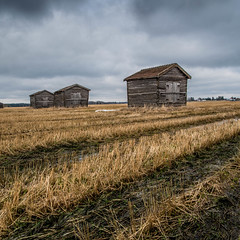 Old barns in the field (Mika Lehtinen) Tags: barn barns field spring wet old finland åker lador