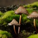 mini fungal world