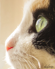 soulful moments (Lucygrafie) Tags: cat catlover cats cateye macro makro katze lucygrafie