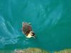 San Antonio 1 P3180039 (icicle24) Tags: san antonio ducks duck color babyduck duckling water nature river riverwalk
