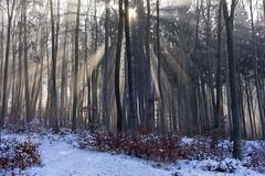 Lichtstrahlen (blichb) Tags: 2017 bayern deutschland inningamammersee sonya7rii zeiss blichb schnee winter licht lichtstrahlen