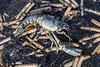 IMG_0359 (Adrian Royle) Tags: lincolnshire skegness gibraltarpointnnr nature wildlife marine beach shellfish crabs urchin lobster starfish nikon macro