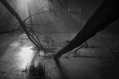 Sturmschäden am Stichkanal... (angelika.kart) Tags: natur kanal bäume sturm eis sonne nebel sonnenstrahlen