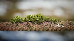 And the winner is.... Nature! (Henryk D) Tags: landschaft natur umwelt