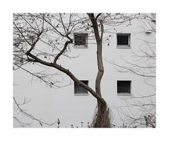 Allegro (hélène chantemerle) Tags: bâtiment façade fenêtres arbre branches hiver blanc noir building house windows tree twigs black white winter