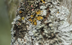 Is it Summer Yet? (rumimume) Tags: potd rumimume 2017 niagara ontario canada photo canon 80d sigma summer sun nature 2018 tree lichen