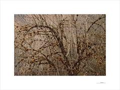 Resilience (E. Pardo) Tags: resilience resiliencia árboles bäume trees formas formen forms bosque wald forest woods troncos baumstämme luz light licht