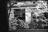 (✞bens▲n) Tags: leica m4 retro 400s rokkor 40mm f2 film blackandwhite analogue japan saitama haikyo abandoned dormitory building trees windows