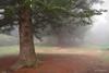 2515  Niebla en Sta. Fe del Montseny, Barcelona (Ricard Gabarrús) Tags: niebla boira ricardgabarrus olympus ricgaba naturaleza