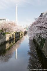 Meguro River Tokyo (takashi_matsumura) Tags: sakura cherry blossoms meguro river meguroku tokyo japan nikon d5300 afp dx nikkor 1020mm f4556g vr ngc