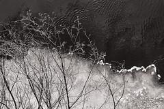 Solid Phase LXXXVIII (pni) Tags: monochrome karisån karjaanjoki tree branch twig water river ice karis karjaa finland suomi pekkanikrus skrubu pni