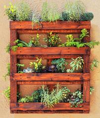 Small plants (chrisk8800) Tags: plants shelf wood decoration barcelona