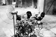 Sleeping beauty (gergelytakacs) Tags: asia china chinese eastasia fareast hk hongkong hongkonger pearlriverestuary sar bw blackandwhite bystander cable calle candid catnap chair city documentary fan fireextinguisher flâneur foldingchair harbor layingdown man monochrome nap napping officechair parazol photo photography plant plants port public rue shorts shovel sleep sleeping space strada stranger strasenfotografie street streetphotographer streetphotography streetphotgrapher streetphotgraphy streetphoto streets streetscape ulica umbrella unposed urban urbanphoto urbanphotographer urbanphotography utcafotó walls wire wiring улица רחוב 香港