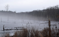 Misty Friday Morning (RockN) Tags: wetland february2018 littleton massachusetts newengland