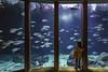 Sala Nautilus -Aquarium Finisterrae (Alphonso Mancuso) Tags: coruña galicia españa aquariumfinisterrae salanautilus acuario interior canon6dmarkii canon24105f4l peces