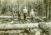 Logging Crew (John M Poltrack) Tags: newipswich newhampshire unitedstates us logging 1900s