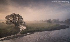View From The Bridge (.Brian Kerr Photography.) Tags: cumbria edenvalley landscapephotography photography landscape lazonby mistymorning misty sony a7rii formatthitech vanguarduk firecrest discountcodebrian10 nature naturallandscape natural outdoor outdoorphotography opoty onlandscape morning briankerrphotography briankerrphoto tree river rivereden sky mist
